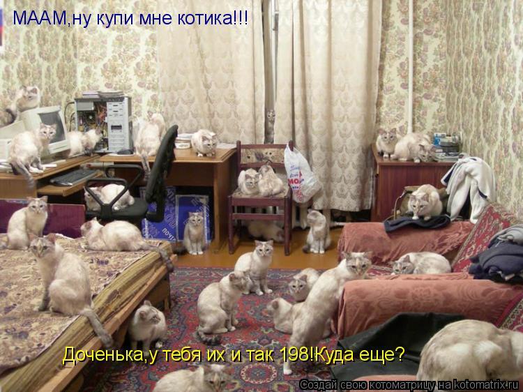 Котоматрица: МААМ,ну купи мне котика!!! Доченька,у тебя их и так 198!Куда еще?