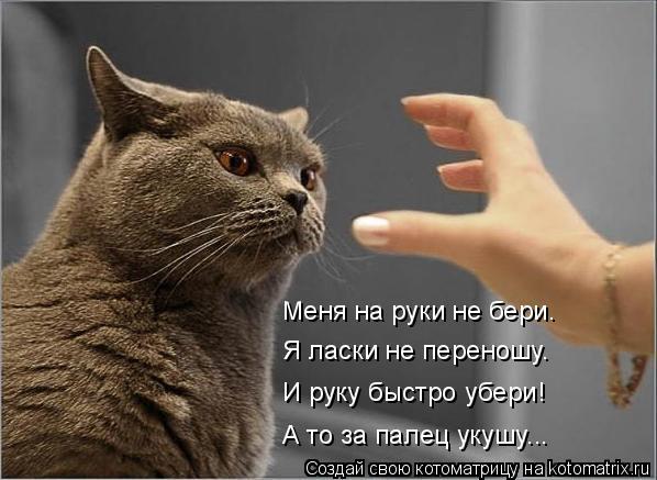 Котоматрица: Меня на руки не бери. Я ласки не переношу. И руку быстро убери! А то за палец укушу...