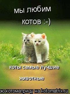 Котоматрица: мы любим котов :-) коты самые лучшие животные