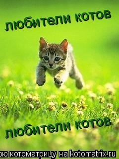 Котоматрица: любители котов любители котов