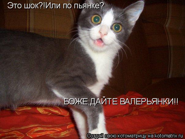 Котоматрица: Это шок?!Или по пьянке? БОЖЕ,ДАЙТЕ ВАЛЕРЬЯНКИ!!