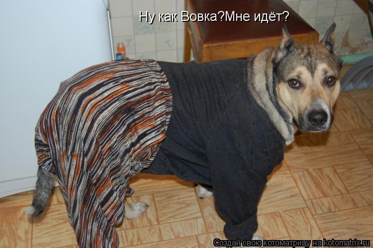Котоматрица: Ну как Вовка?Мне идёт?
