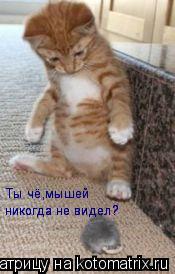 Котоматрица: Ты чё,мышей никогда не видел? никогда не видел? никогда не видел? Ты чё,мышей