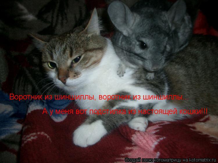 Котоматрица: Воротник из шиншиллы, воротник из шиншиллы... А у меня вот подстилка из настоящей кошки!!!