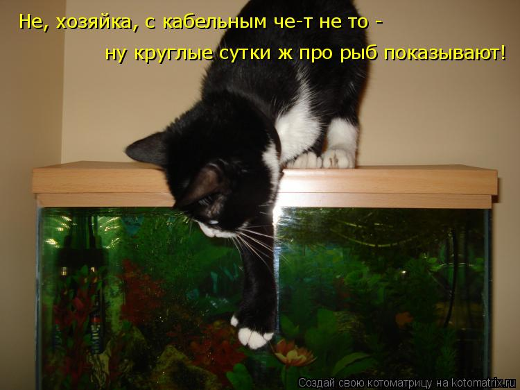 Котоматрица: Не, хозяйка, с кабельным че-т не то -  ну круглые сутки ж про рыб показывают!