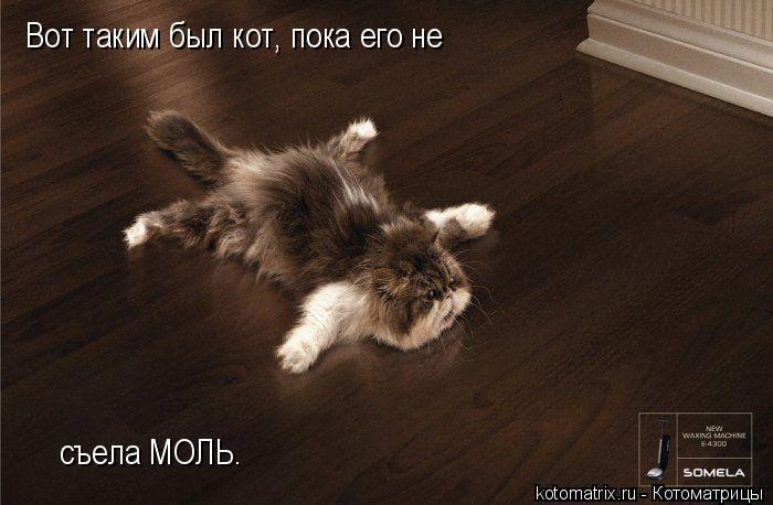 Котоматрица: Вот таким был кот, пока его не съела МОЛЬ.
