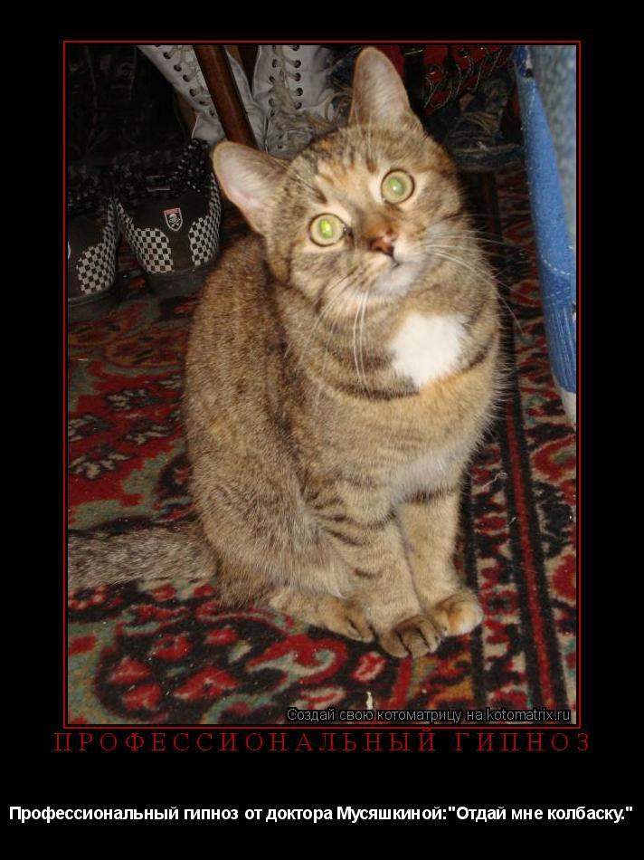 "Котоматрица: Профессиональный гипноз Профессиональный гипноз от доктора Мусяшкиной:""Отдай мне колбаску."""