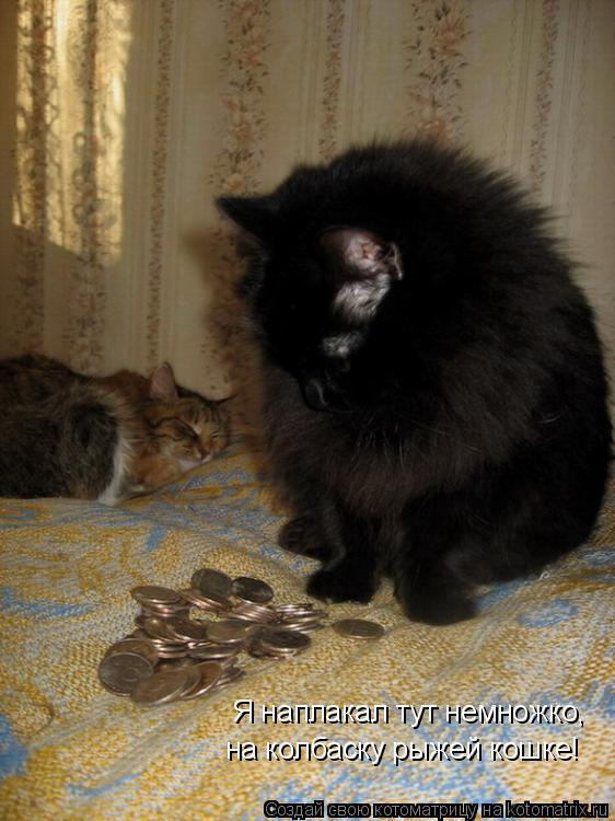 Котоматрица: Я наплакал тут немножко,  на колбаску рыжей кошке!