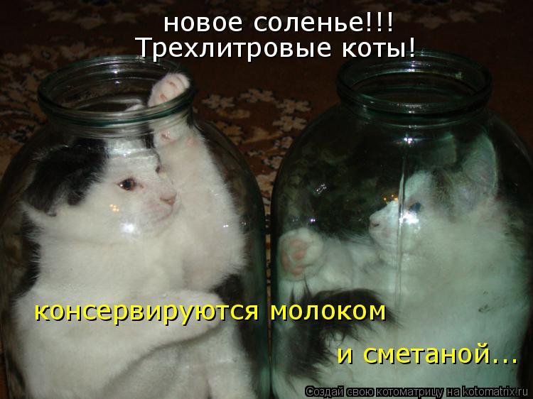 Котоматрица: новое соленье!!! Трехлитровые коты! консервируются молоком и сметаной...