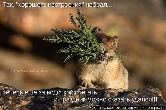 """Котоматрица: Так, """"хорошего настроения"""" набрал.... Теперь ещё за водочкой сбегать  и праздник можно сказать удался!!!"""