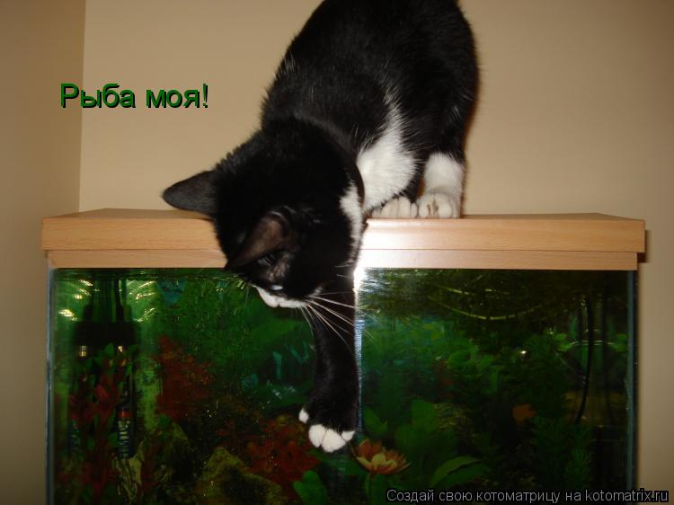 Котоматрица: Рыба моя!