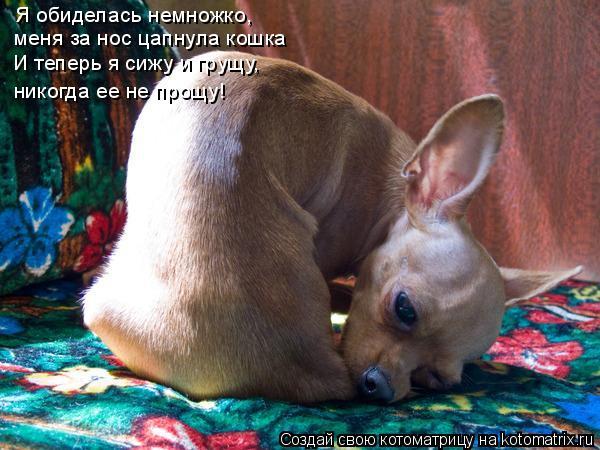 Котоматрица: Я обиделась немножко, меня за нос цапнула кошка И теперь я сижу и грущу, никогда ее не прощу!