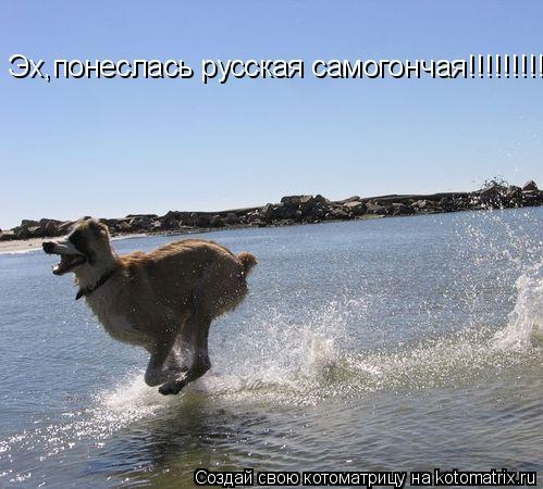 Котоматрица: Эх,понеслась русская самогончая!!!!!!!!!!!!