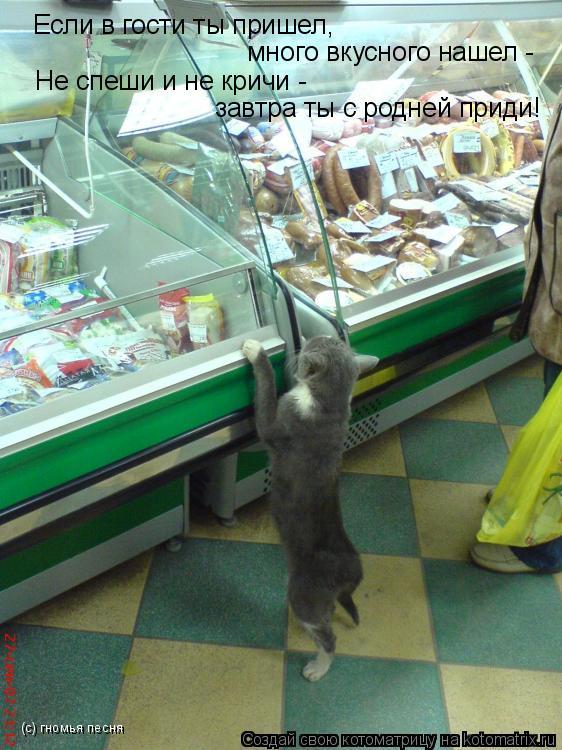Котоматрица: Если в гости ты пришел,  много вкусного нашел - Не спеши и не кричи -  завтра ты с родней приди! (с) гномья песня