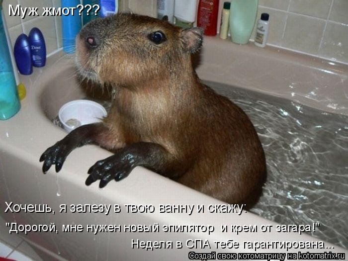 """Котоматрица: Муж жмот???  Хочешь, я залезу в твою ванну и скажу:  """"Дорогой, мне нужен новый эпилятор  и крем от загара!"""" Неделя в СПА тебе гарантирована..."""