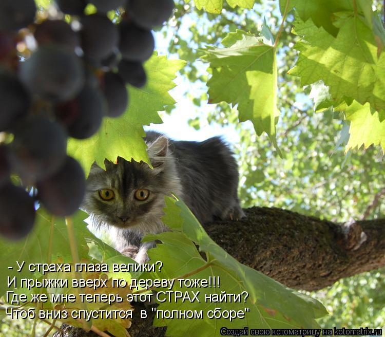 """Котоматрица: - У страха глаза велики? И прыжки вверх по дереву тоже!!! Где же мне теперь этот СТРАХ найти? Чтоб вниз спустится  в """"полном сборе"""""""