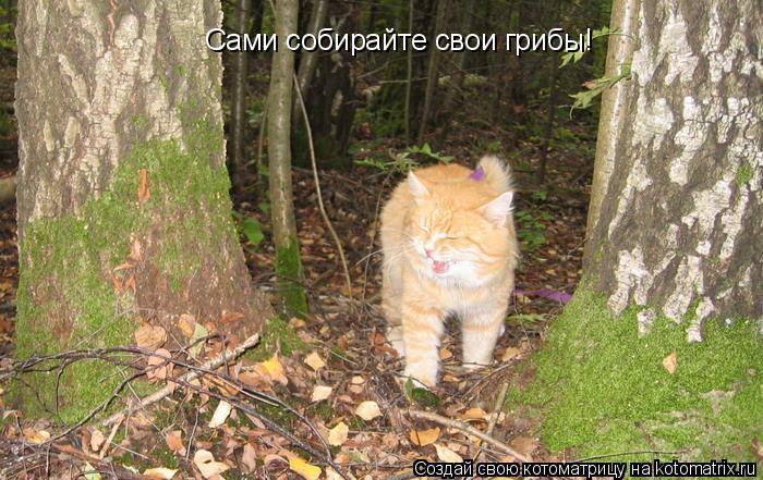 Котоматрица: Сами собирайте свои грибы!