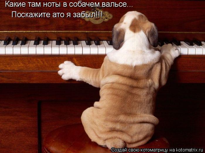 Котоматрица: Какие там ноты в собачем вальсе...  Поскажите ато я забыл!!!