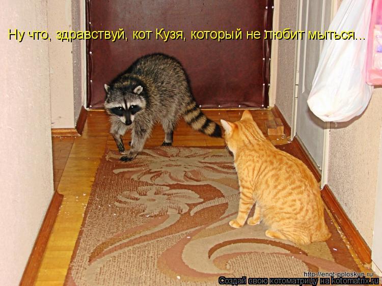 Котоматрица: Ну что, здравствуй, кот Кузя, который не любит мыться...