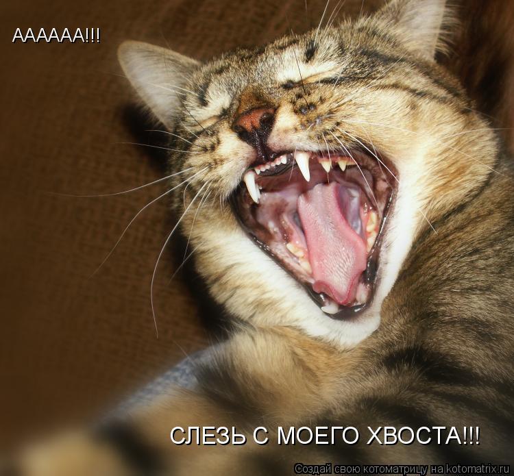 Котоматрица: АААААА!!! СЛЕЗЬ С МОЕГО ХВОСТА!!!