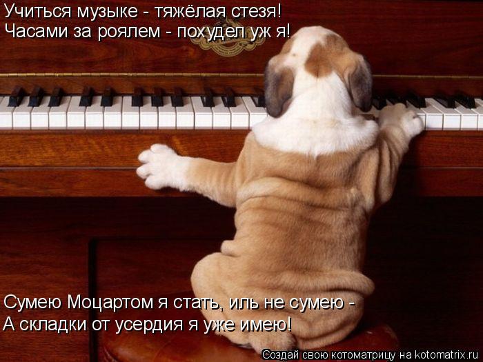Котоматрица: Учиться музыке - тяжёлая стезя! Часами за роялем - похудел уж я! Сумею Моцартом я стать, иль не сумею - А складки от усердия я уже имею!