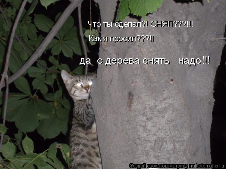 Котоматрица: Что ты сделал?! СНЯЛ???!!!  да  с дерева снять   надо!!! Как я просил???!!