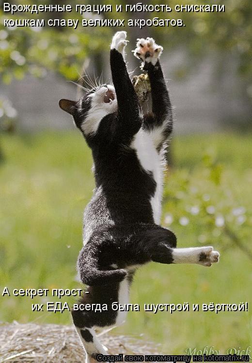 Котоматрица: Врожденные грация и гибкость снискали  кошкам славу великих акробатов.  А секрет прост -  их ЕДА всегда была шустрой и вёрткой!