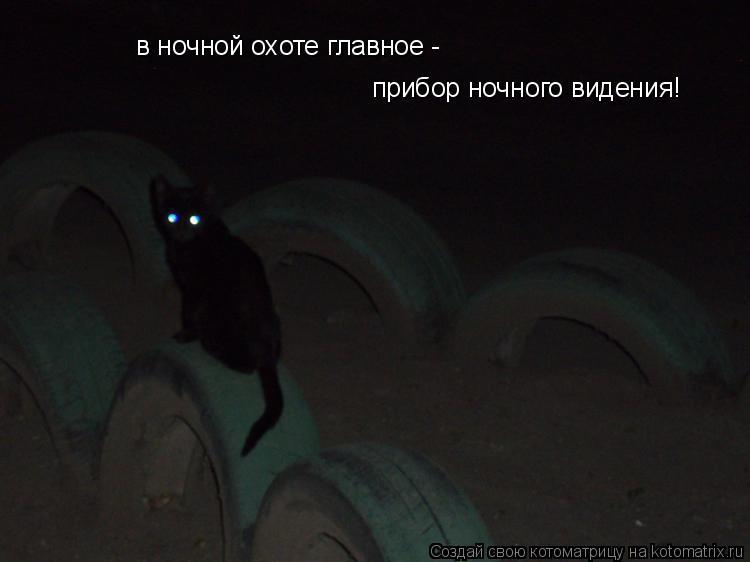 Котоматрица: в ночной охоте главное - прибор ночного видения!