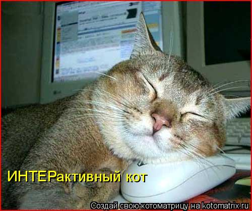 Котоматрица: ИНТЕРактивный кот