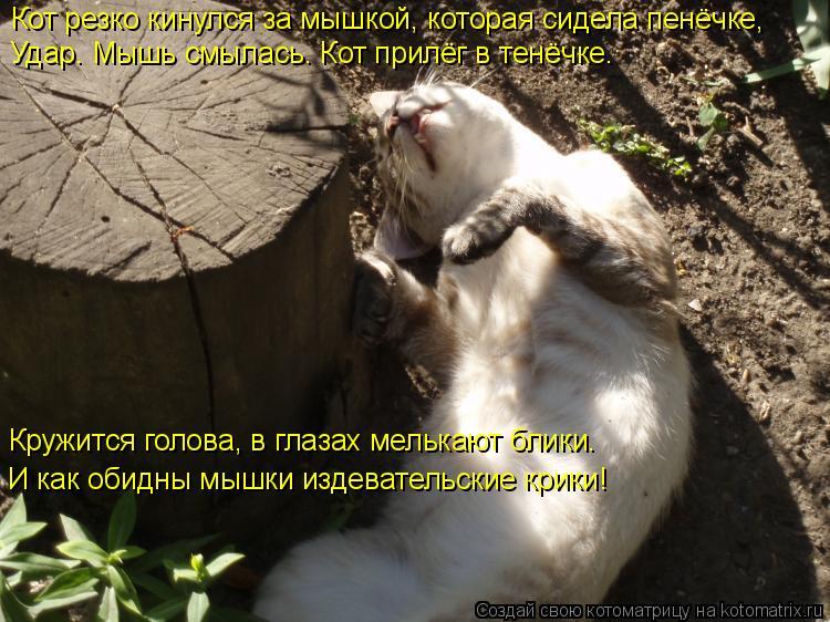 Котоматрица: Удар. Мышь смылась. Кот прилёг в тенёчке. Кружится голова, в глазах мелькают блики.  И как обидны мышки издевательские крики! Кот резко кинул
