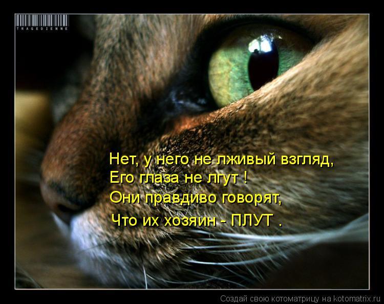 Котоматрица: Нет, у него не лживый взгляд,  Его глаза не лгут ! Они правдиво говорят, Что их хозяин - ПЛУТ .