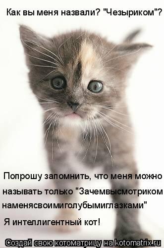 """Котоматрица: Попрошу запомнить, что меня можно называть только """"Зачемвысмотриком наменясвоимиголубымиглазками"""" Я интеллигентный кот! Как вы меня назва"""