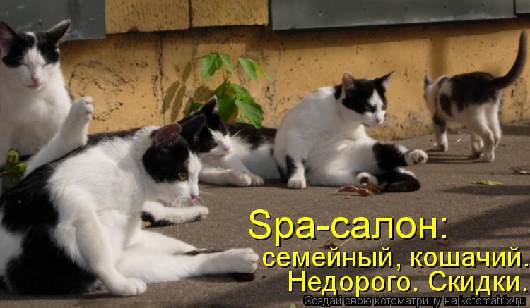 Котоматрица: Spa-салон: Недорого. Скидки. семейный, кошачий.
