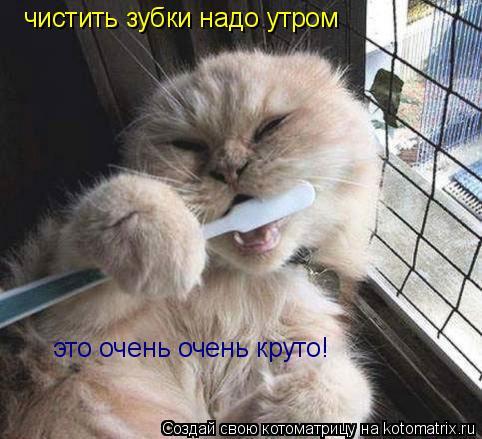 Котоматрица: чистить зубки надо утром  это очень очень круто!