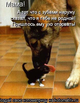 Котоматрица: Мама! А тот что с зубами наружу сказал, что я тебе не родной! Пришлось ему ухо оторвать!