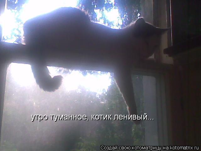 Котоматрица: утро туманное, котик ленивый...