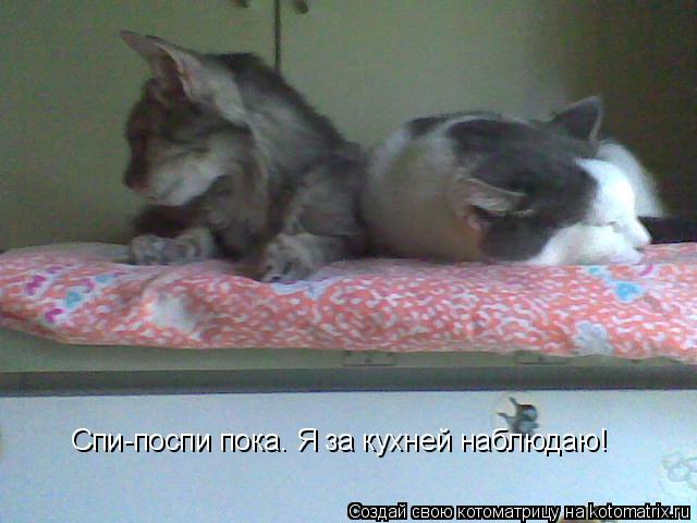 Котоматрица: Спи-поспи пока. Я за кухней наблюдаю!