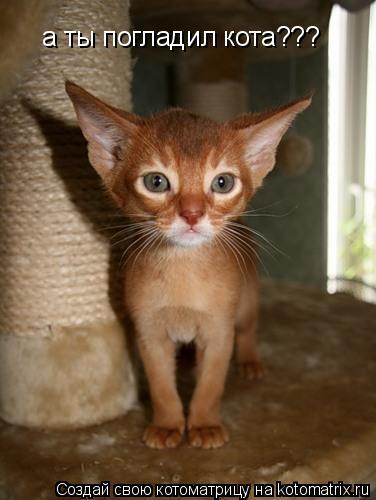 Котоматрица: а ты погладил кота???