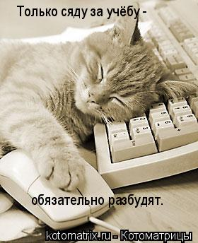 Котоматрица: Только сяду за учёбу -   обязательно разбудят.