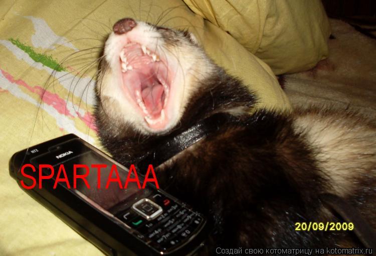 Котоматрица: SPARTAAA