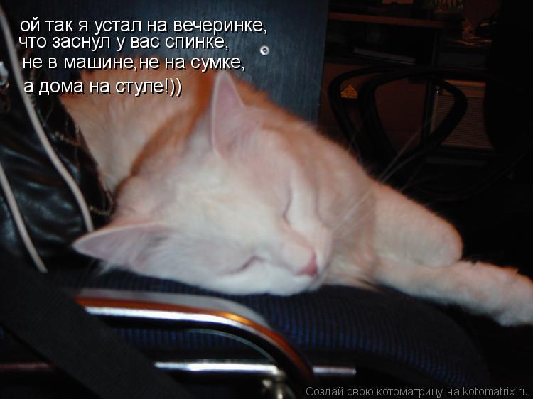 Котоматрица: ой так я устал на вечеринке, что заснул у вас спинке, не в машине,не на сумке, а дома на стуле!))