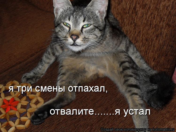 Котоматрица: я три смены отпахал,  отвалите.......я устал