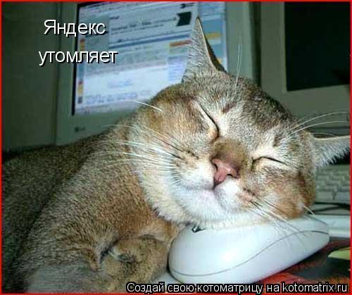 Котоматрица: Яндекс утомляет