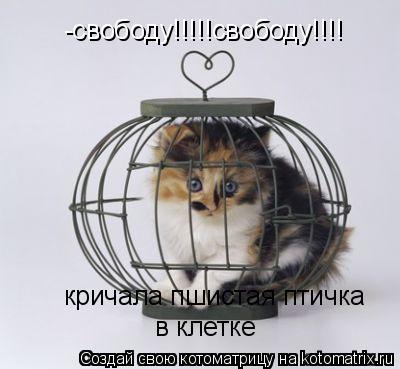 Котоматрица: -свободу!!!!!свободу!!!! кричала пшистая птичка  в клетке