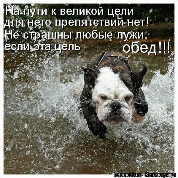 Котоматрица: На пути к великой цели  для него препятствий нет!  Не страшны любые лужи,  если эта цель -  обед!!!