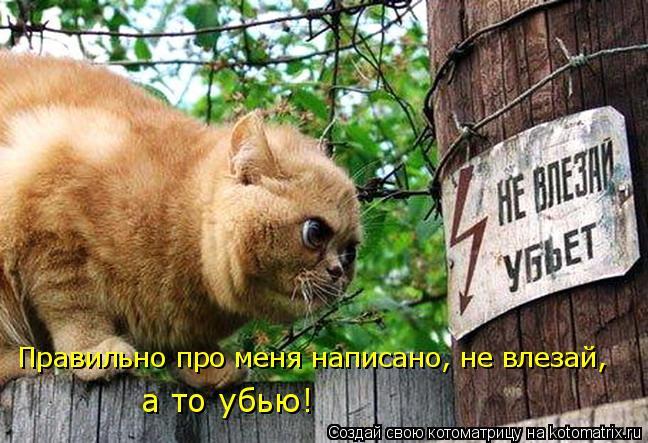 Котоматрица: Правильно про меня написано, не влезай, а то убью!