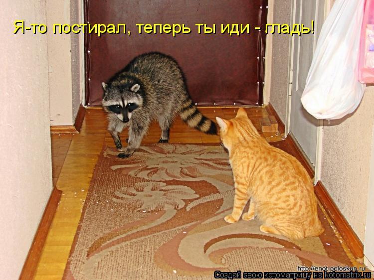 Котоматрица: Я-то постирал, теперь ты иди - гладь!