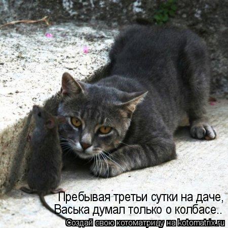 Котоматрица: Пребывая третьи сутки на даче, Васька думал только о колбасе..