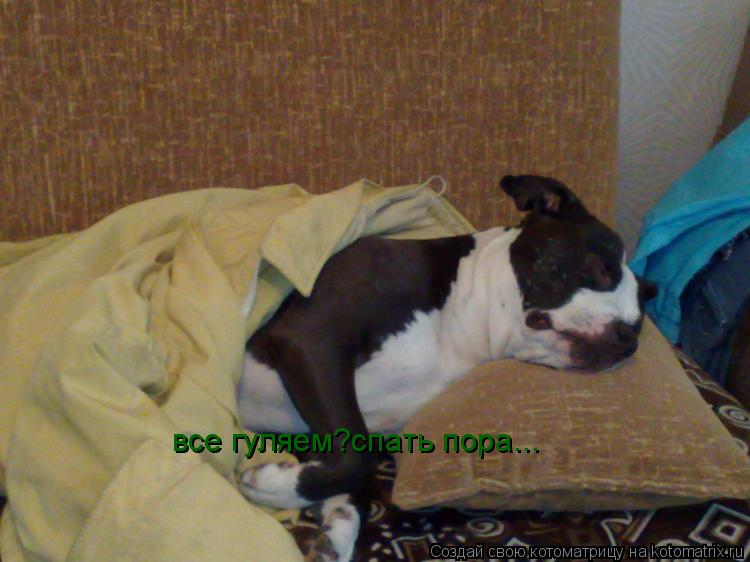 Котоматрица: все гуляем?спать пора...