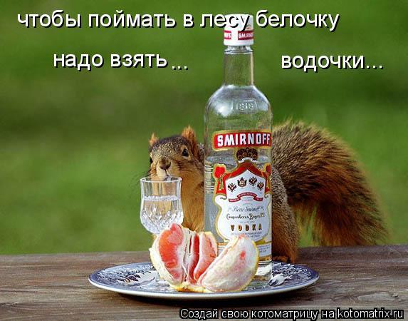 Котоматрица: чтобы поймать в лесу белочку надо взять водочки... ...